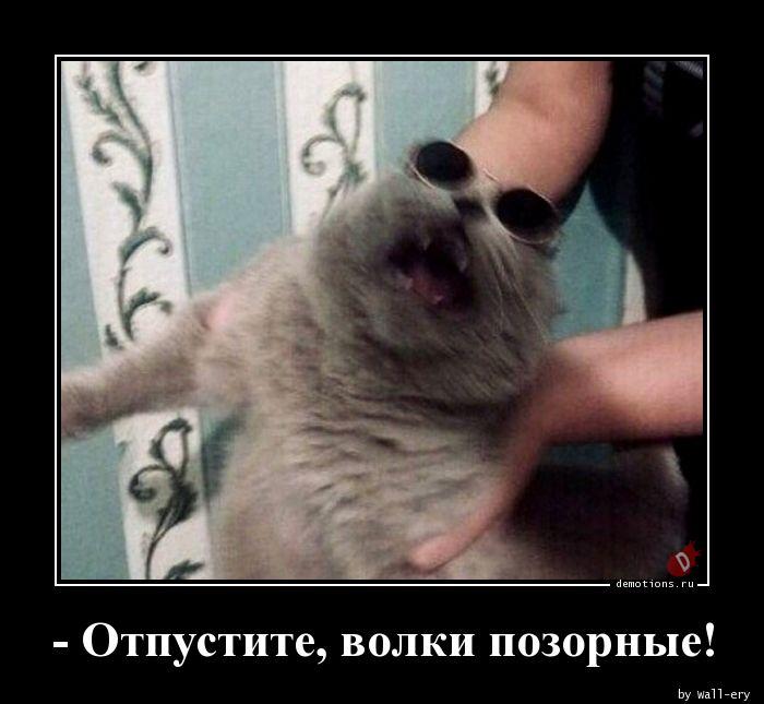 - Отпустите, волки позорные!