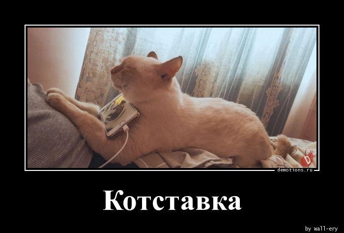 Котставка