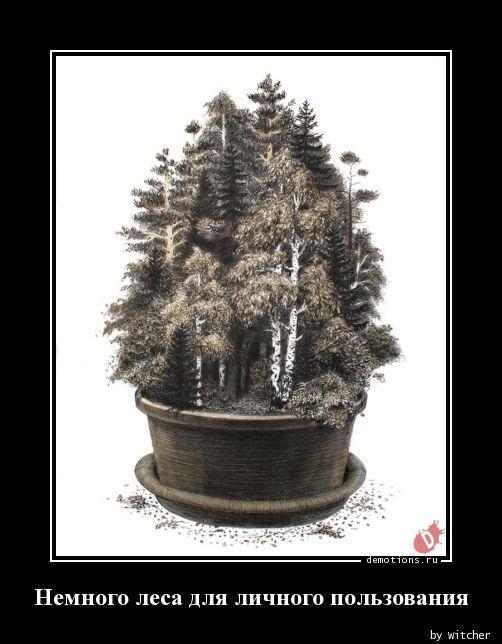 Немного леса для личного пользования