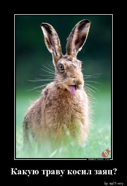 Какую траву косил заяц?