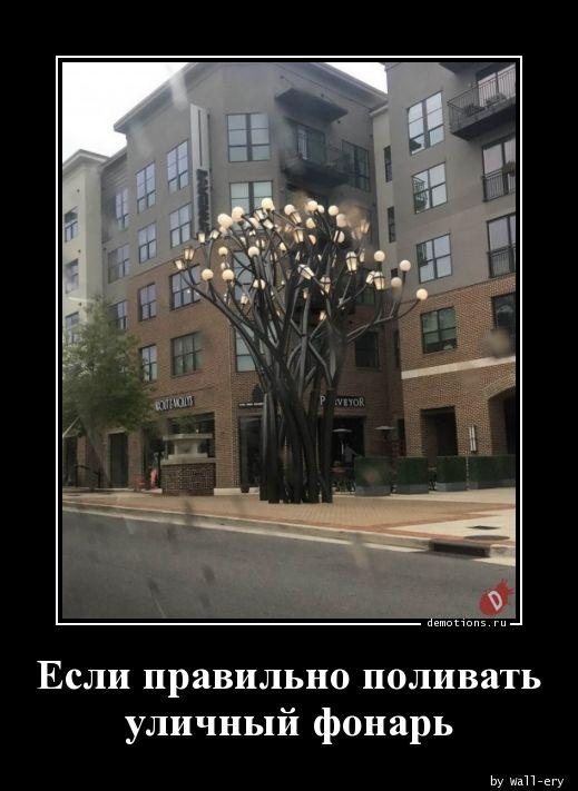 Если правильно поливать уличный фонарь