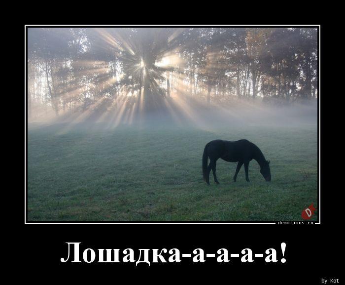 Лошадка-а-а-а-а!