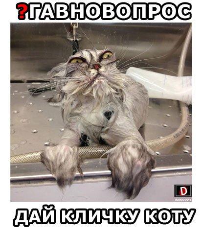 ДАЙ КЛИЧКУ КОТУ