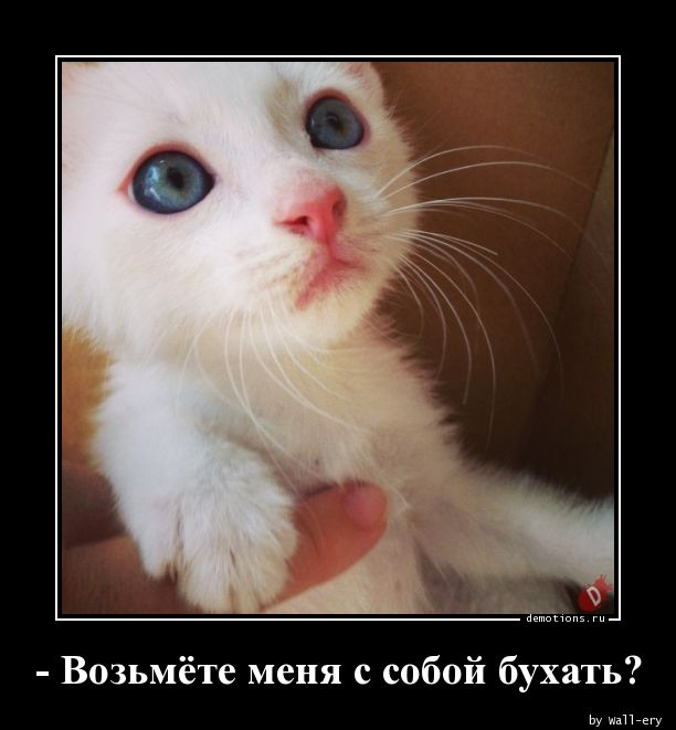 - Возьмёте меня с собой бухать?