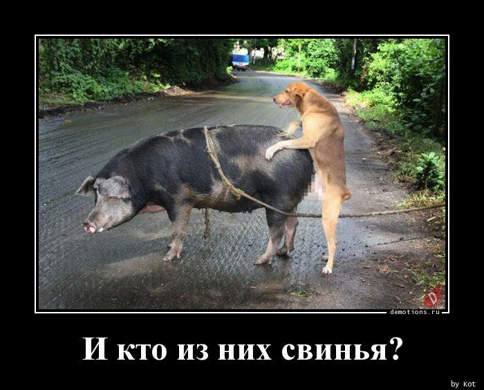 И кто из них свинья?