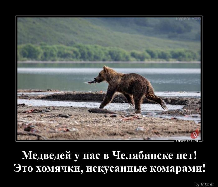 Медведей у нас в Челябинске нет! Это хомячки, искусанные комарами!