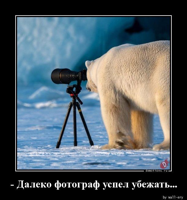 - Далеко фотограф успел убежать...