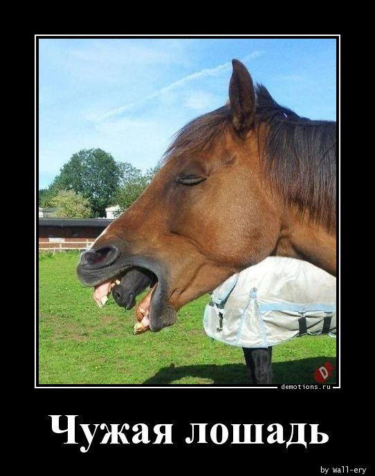 Чужая лошадь