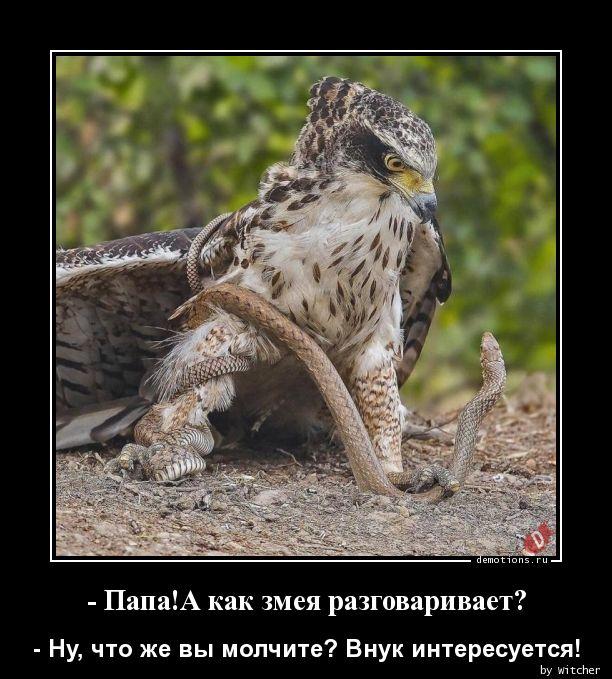 - Папа!А как змея разговаривает?