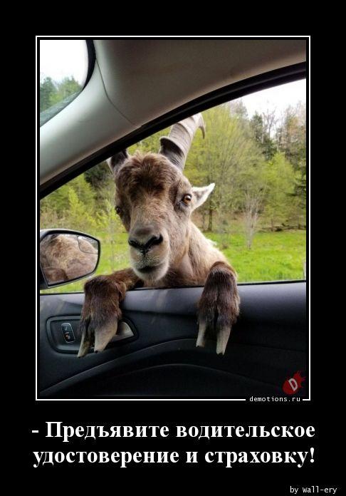 - Предъявите водительское удостоверение и страховку!