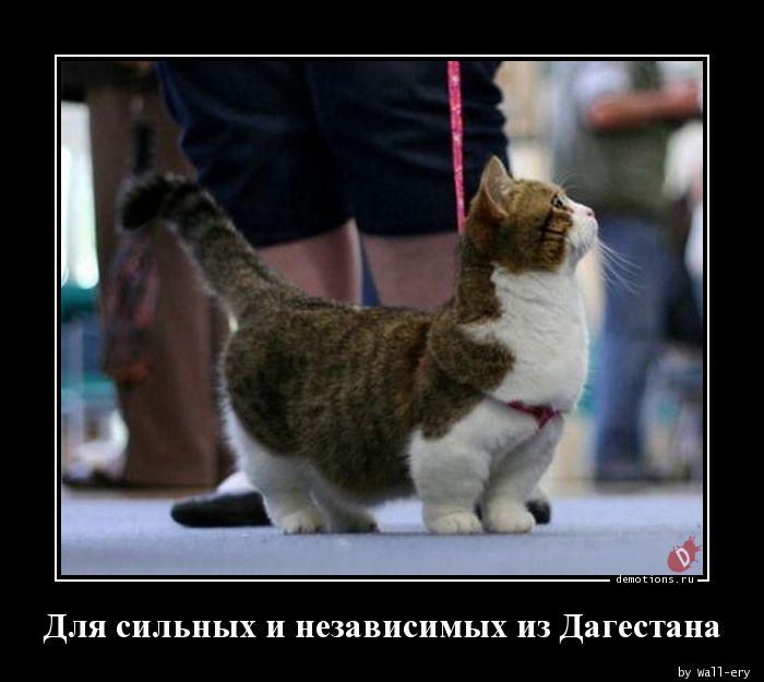 Для сильных и независимых из Дагестана
