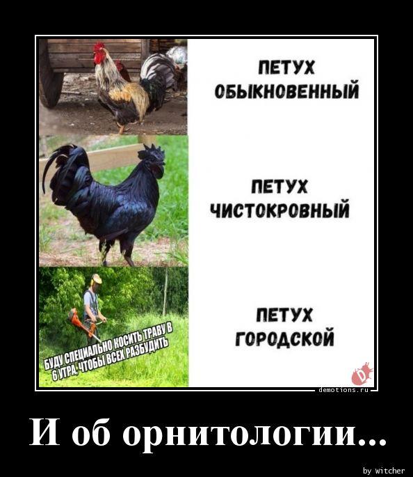 И об орнитологии...