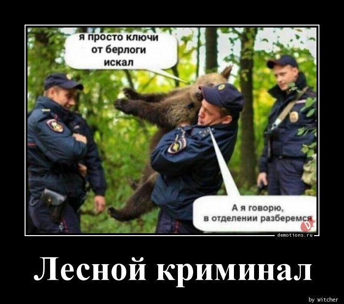 Лесной криминал
