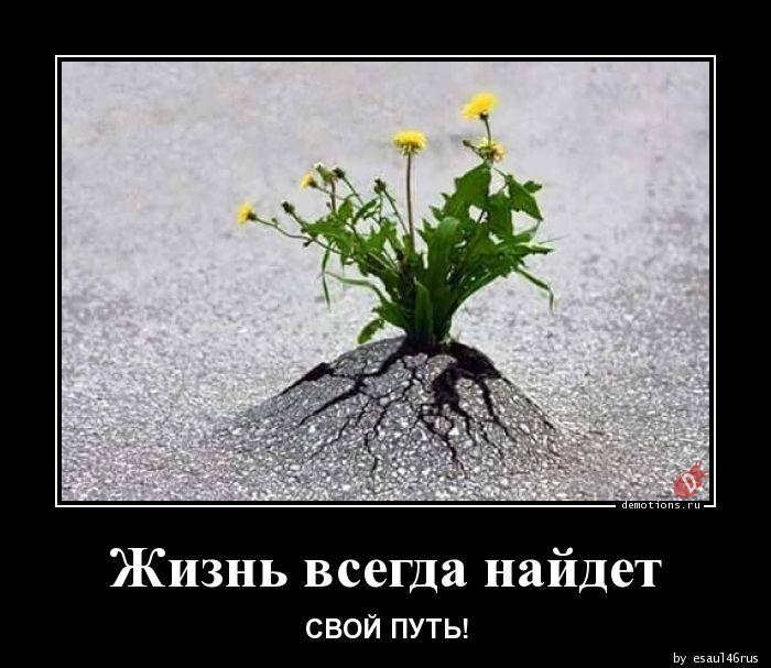 Жизнь всегда найдет