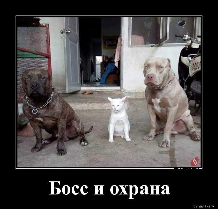 Босс и охрана