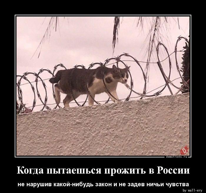 Когда пытаешься прожить в России