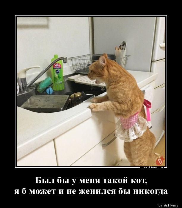 Был бы у меня такой кот, я б может и не женился бы никогда