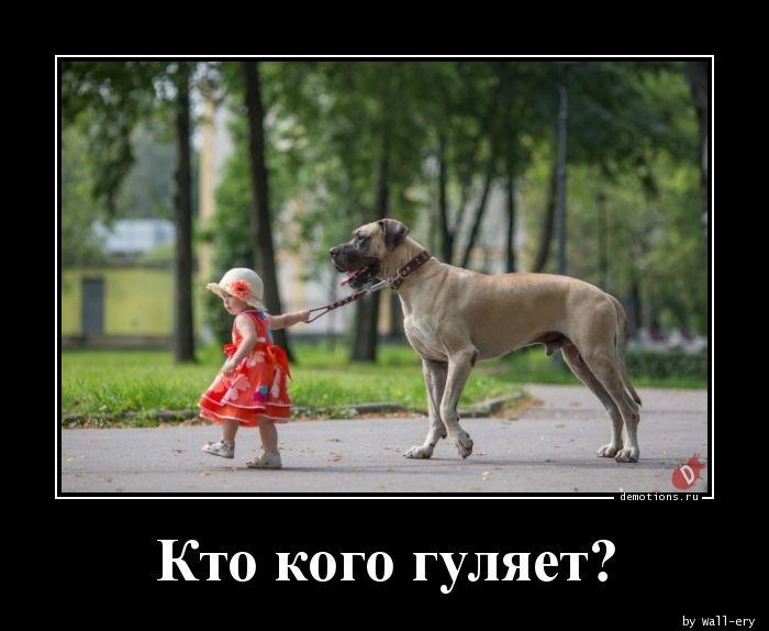 Кто кого гуляет?