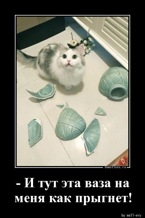 - И тут эта ваза на меня как прыгнет!