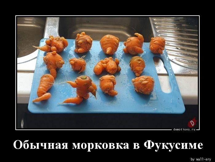Обычная морковка в Фукусиме