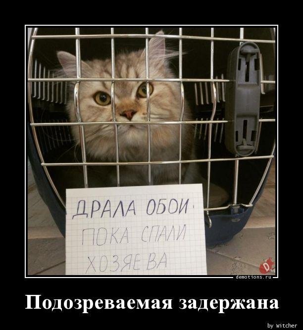 Подозреваемая задержана