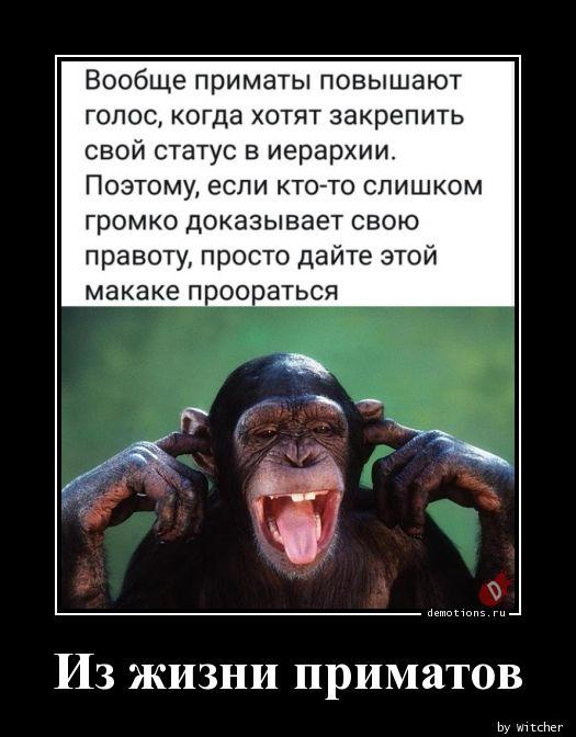 Из жизни приматов