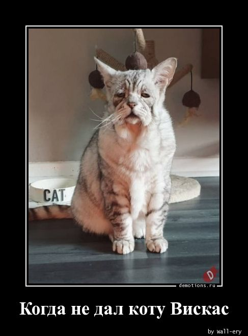 Когда не дал коту Вискас