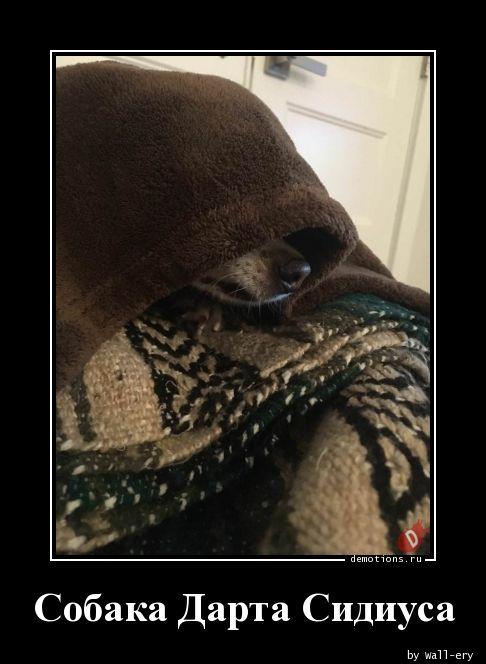 Собака Дарта Сидиуса