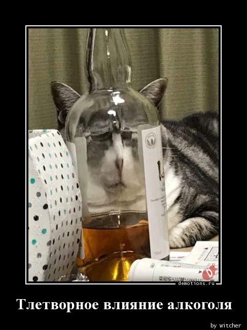 Тлетворное влияние алкоголя