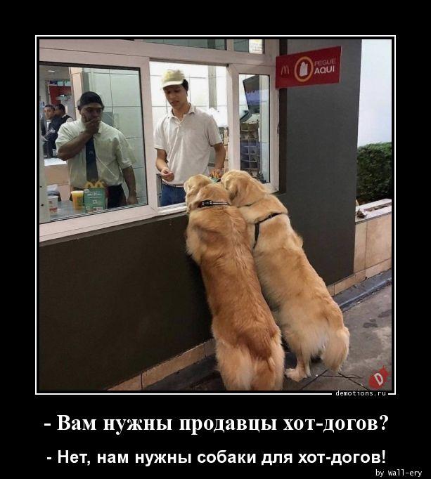 - Вам нужны продавцы хот-догов?