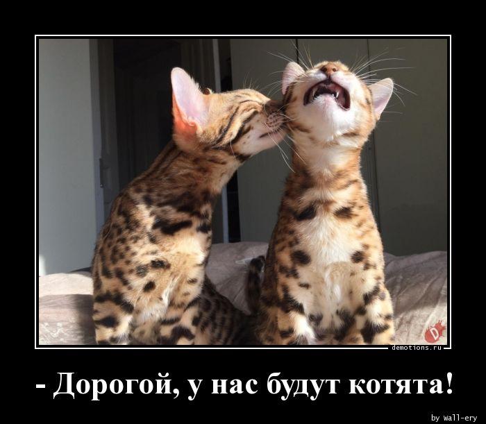 - Дорогой, у нас будут котята!