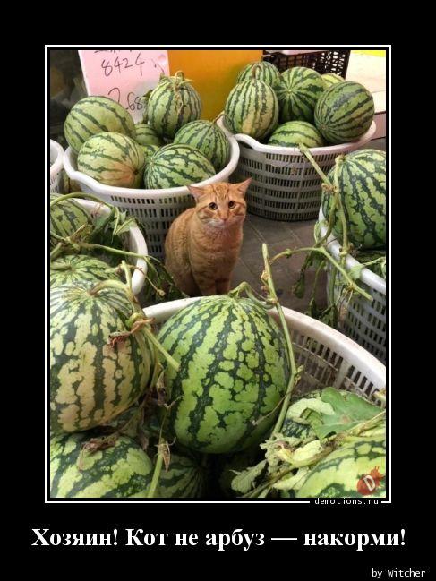 Хозяин! Кот не арбуз — накорми!