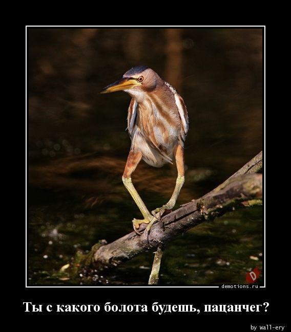 Ты с какого болота будешь, пацанчег?