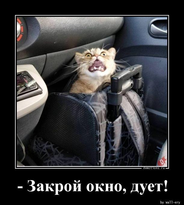 - Закрой окно, дует!