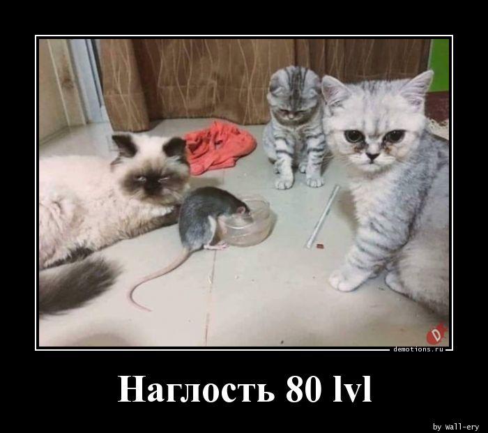 Наглость 80 lvl