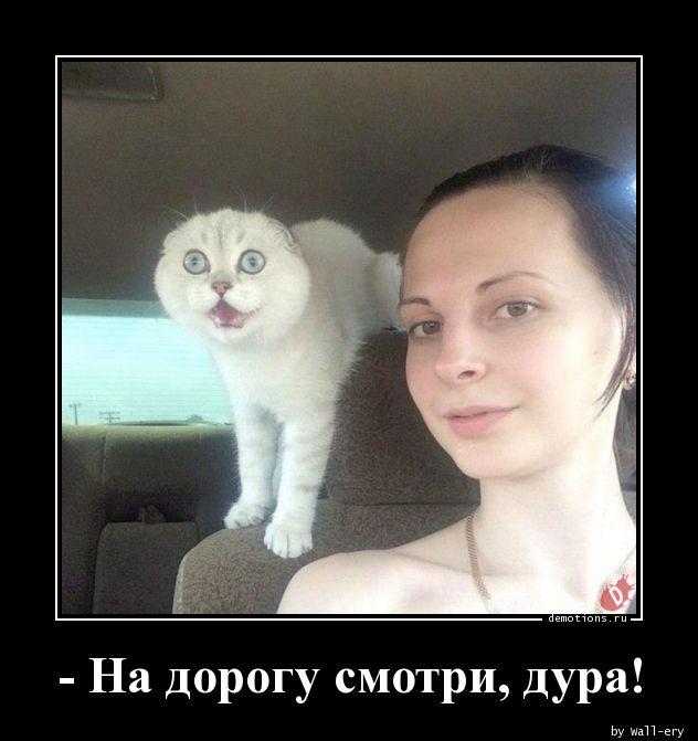 - На дорогу смотри, дура!