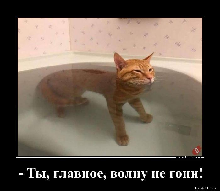 - Ты, главное, волну не гони!