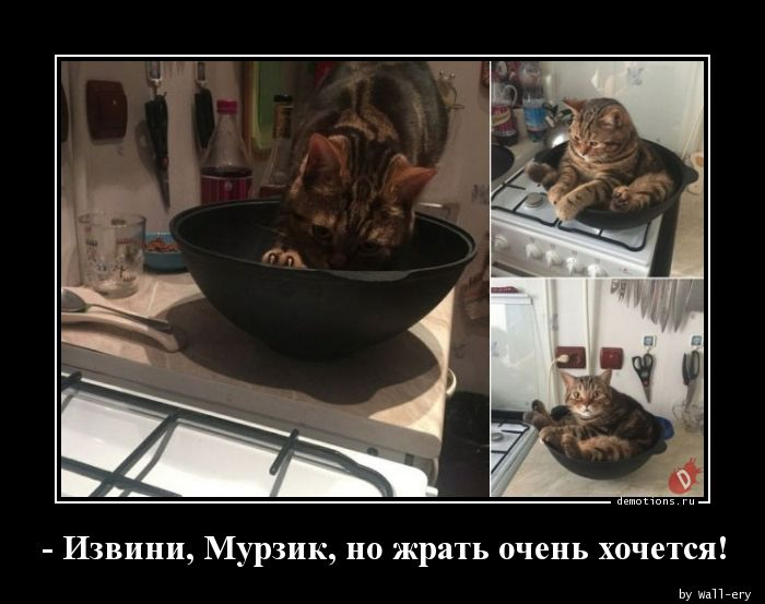- Извини, Мурзик, но жрать очень хочется!