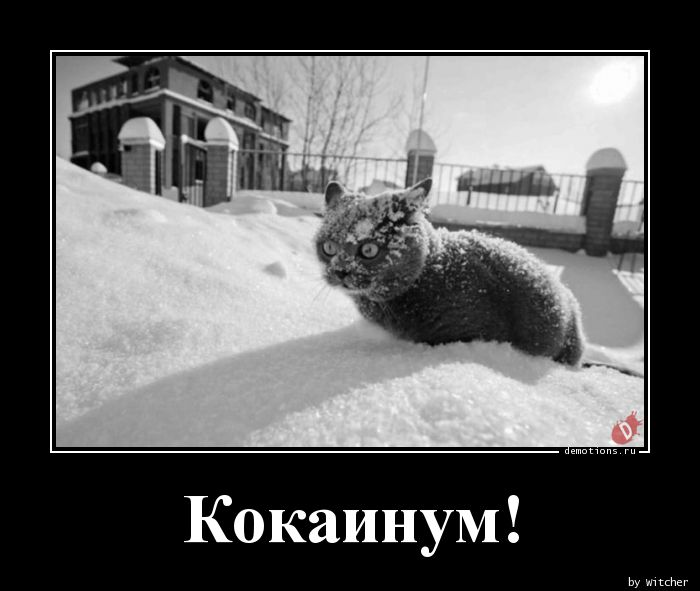 1562477392_Kokainum_demotions.ru.jpg