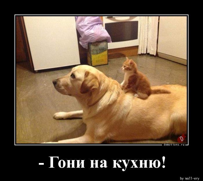 - Гони на кухню!
