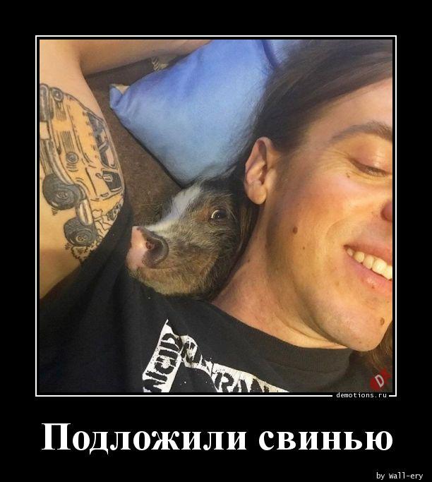 Подложили свинью