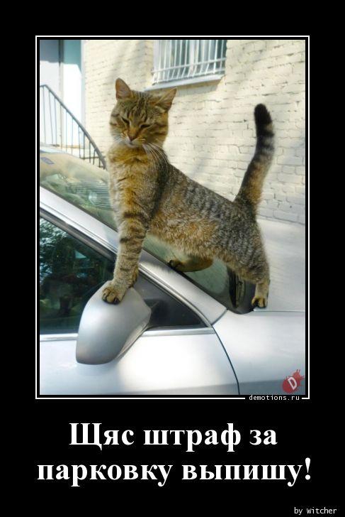 Щяс штраф за парковку выпишу!