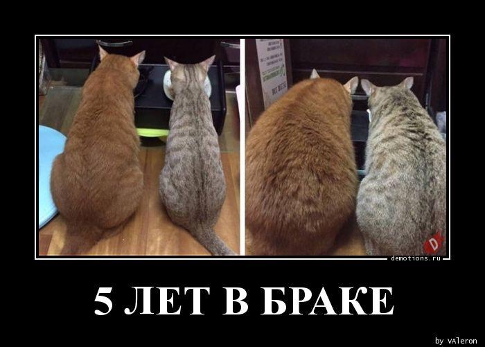 5 ЛЕТ В БРАКЕ