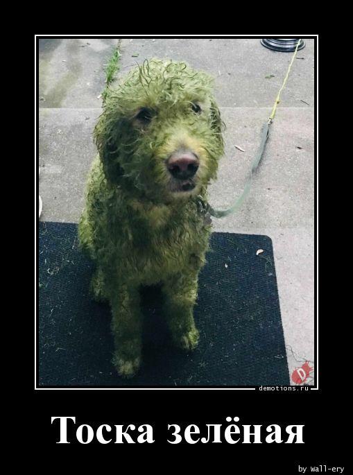 Тоска зелёная