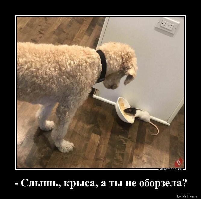 - Слышь, крыса, а ты не оборзела?
