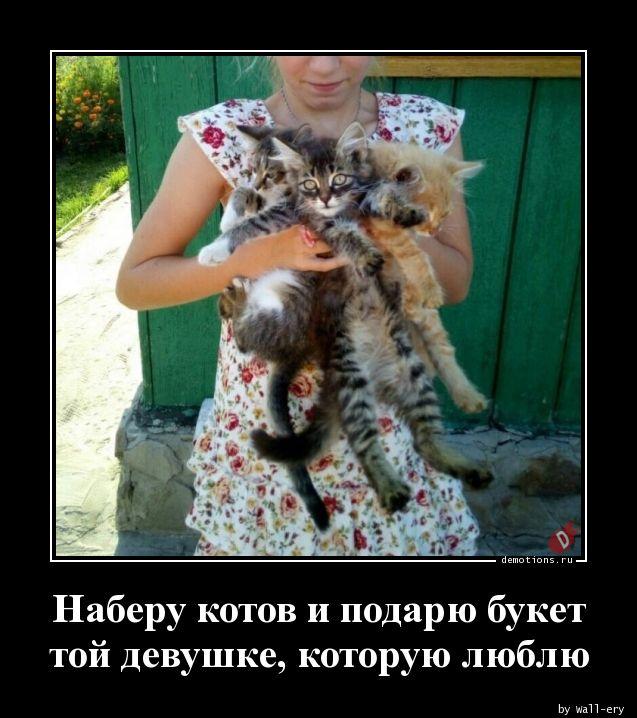 Наберу котов и подарю букет той девушке, которую люблю