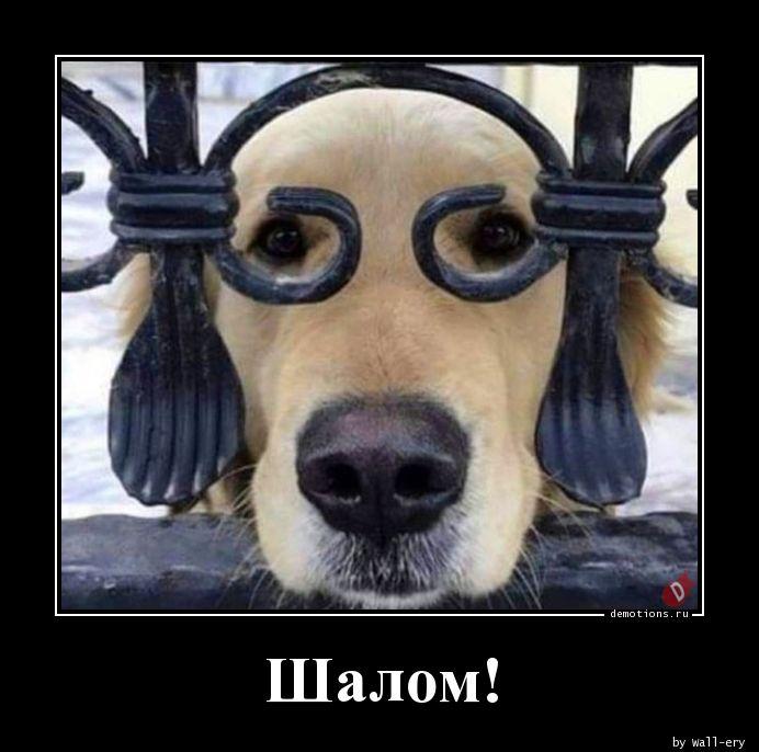 1566464304_Shalom_demotions.ru.jpg