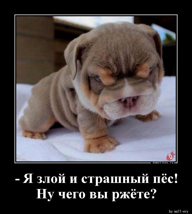 - Я злой и страшный пёс! Ну чего вы ржёте?