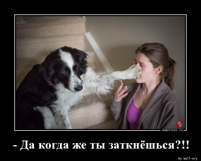 - Да когда же ты заткнёшься?!!