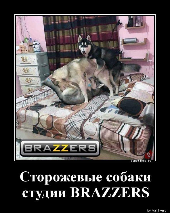Сторожевые собаки студии BRAZZERS